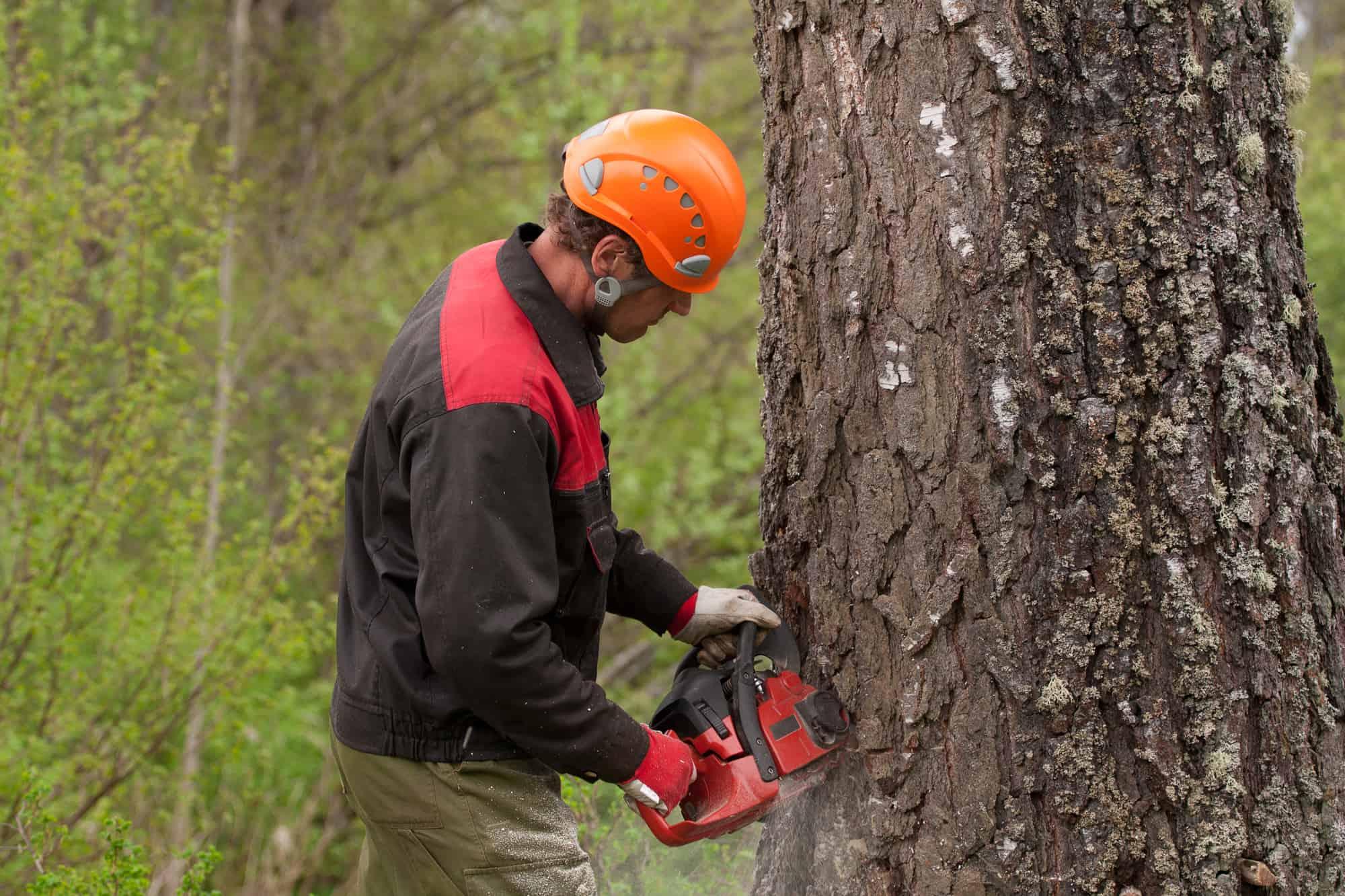 fælde træ